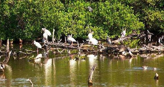 Parque Nacional El Bagá de Cayo Coco