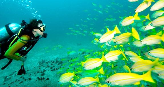 Mergulho em Puerto Vallarta
