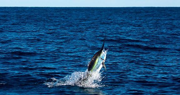 Pesca esportiva em Los Cabos