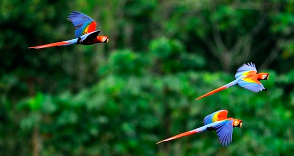 AMAZÔNIA COMPLETA: Aéreo + HOTEL NA SELVA + Passeios!