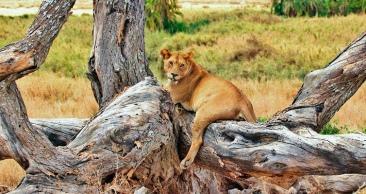 ÁFRICA DO SUL: Cidade do Cabo + Kruger Park com SAFÁRI!!!