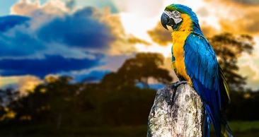 Experiência ÚNICA na AMAZÔNIA: AMAZON ECOPARK LODGE
